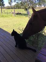 Gato adoptado que creció en un refugio hace su primer amigo: un caballo