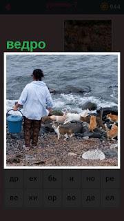 около воды собрались кошки и женщина с ведром пришла