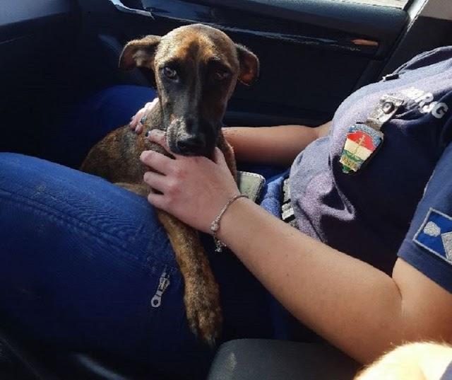 Törött lábú, kistigrisre hasonlító kutyát mentettek a rendőrök Nagykátán
