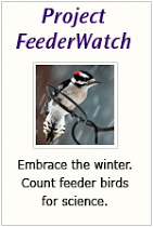 We participate in, Project FeederWatch