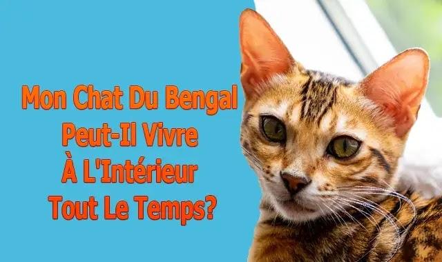 Mon Chat Du Bengal Peut-Il Vivre À L'Intérieur Tout Le Temps?