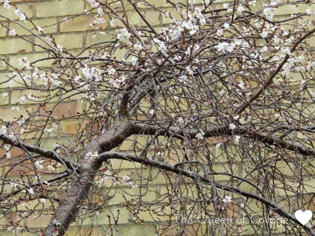 #MySundayPhoto - Blossom