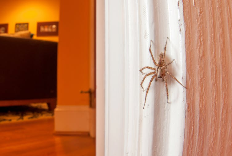 Why We Shouldn't Kill Spiders In Our Houses, According To Entomology