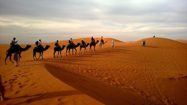 caravan, desert, safari, dune, camels, ride