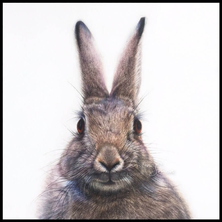 10-Bunny-Rabbit-Cristina-Simon-www-designstack-co