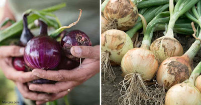 2 Anticancer Allies To Include In Your Diet: Garlic and Onion