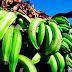 El dominicano promedio consume unos 250 plátanos al año
