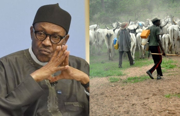 Fulani Herdsmen advice Buhari to develop livestock instead of searching for oil in the north