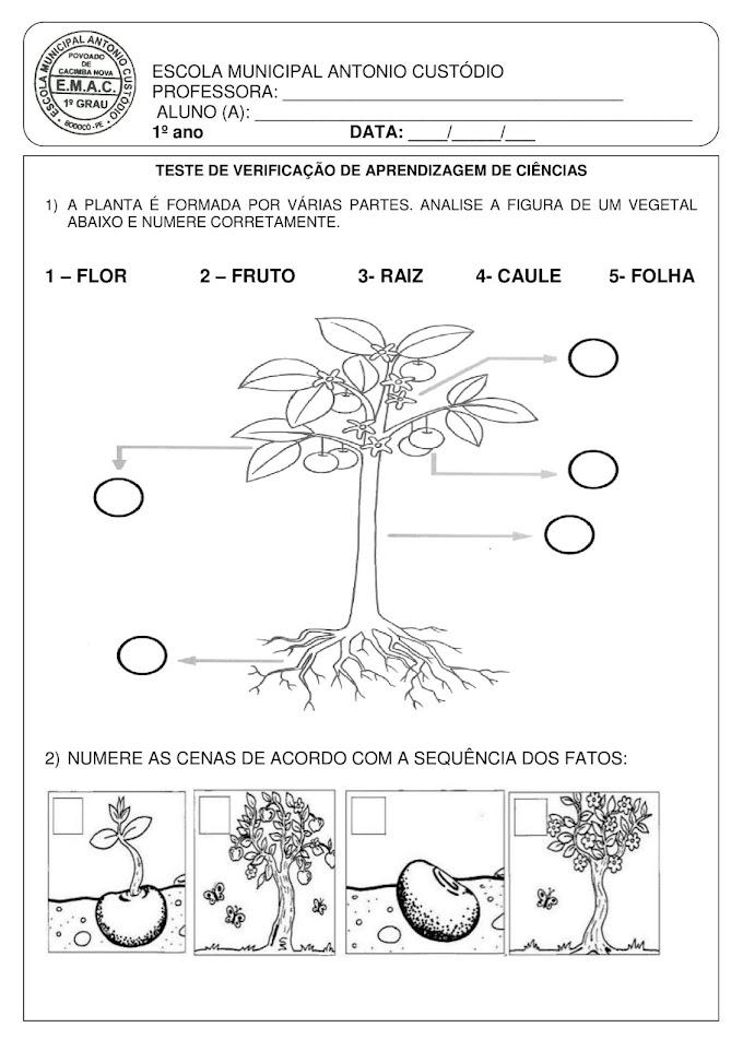 AVALIAÇÃO II BIMESTRE DE CIÊNCIAS 1º ANO FUNDAMENTAL.