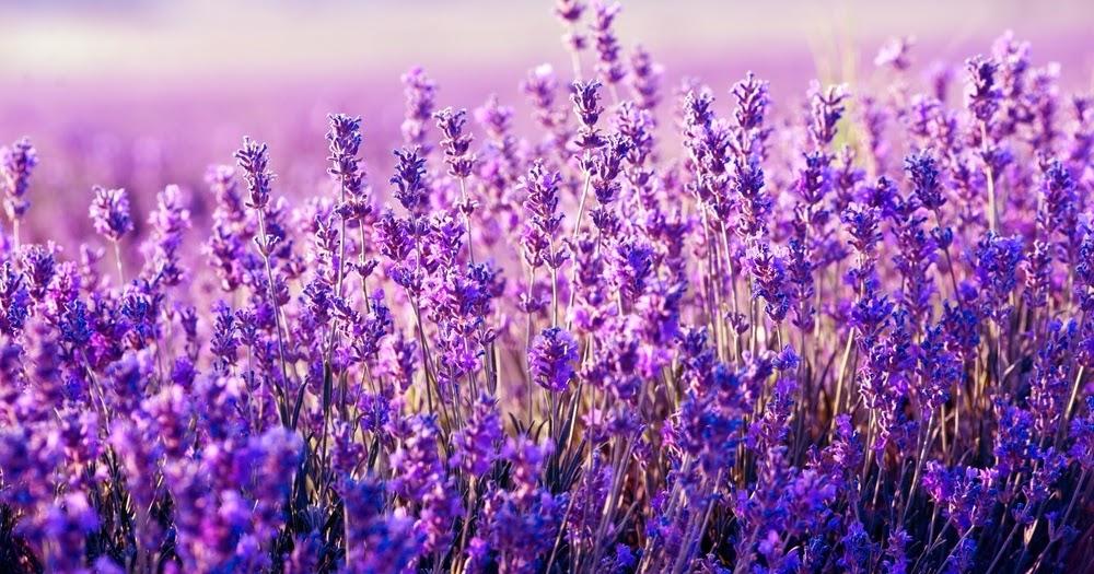 5 oli essenziali per calmare ansia e stress: Il potere curativo dell'olfatto
