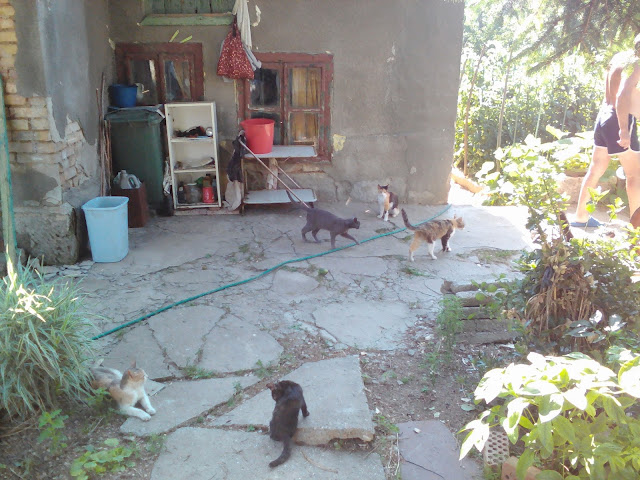 Village cats around the hose