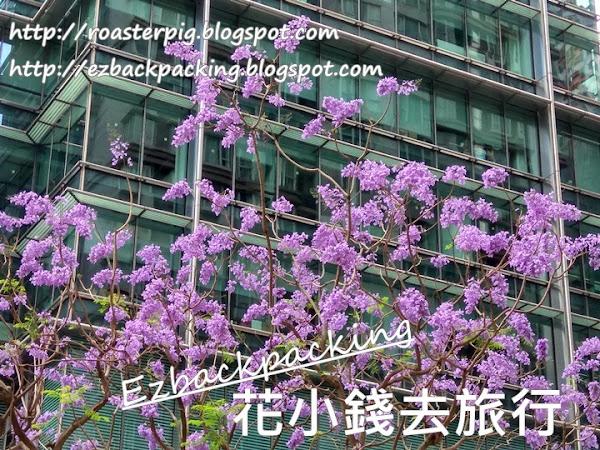 2021年香港藍花楹+6月17日開花情報+賞花好去處