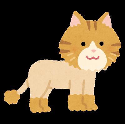 サマーカットの猫のイラスト