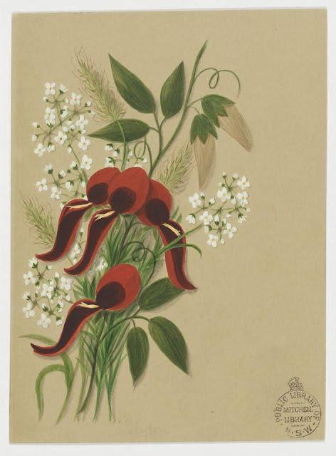 Christmas Card design depicting Australian wild flowers.