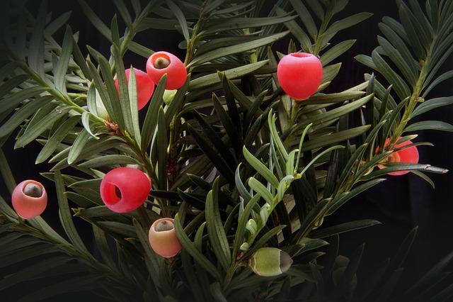 A propos des plantes Ornementales