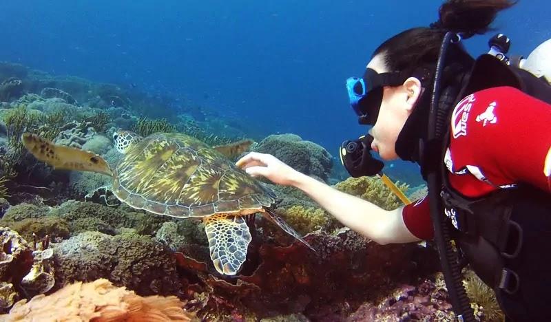 Diving di Pulau Komodo