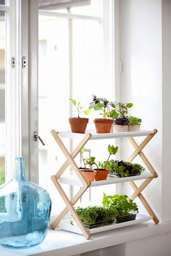 Foundation Dezin & Decor...: Indoor plants for living room.