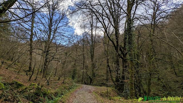 Bosque de Cea subiendo a Llombecima
