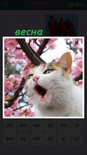 кошка весной около дерева с распустившимися бутонами