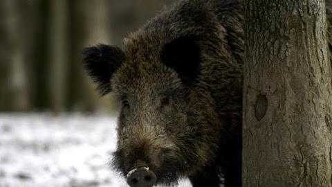 Kitiltják a kirándulókat az egri erdőből – Itt az indok