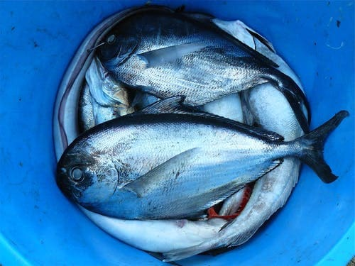 What are the benefits of fish for women?