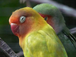 Cara Mengatasi Burung Terkena Flu