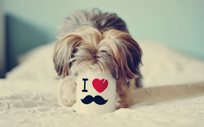 dog-cup-heart-love-photo-wallpaper