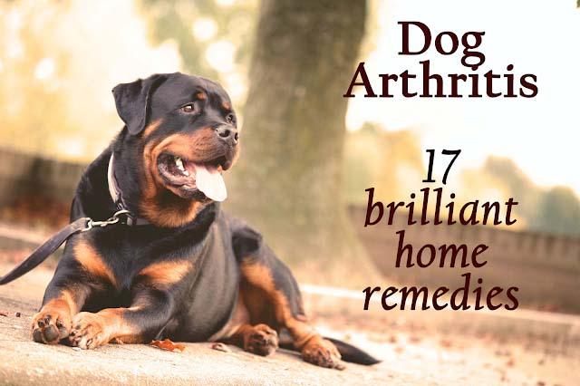 Dog arthritis: 17 brilliant home remedies