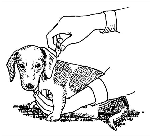 Healthy Dachshund 101 We Love Pets