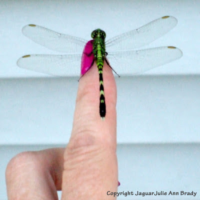 Green dragonfly on my finger