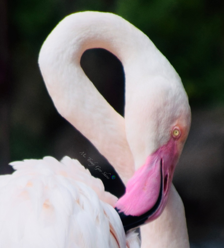Flamingo Gardens in Florida has a lot more than just flamingos!   Ms. Toody Goo Shoes #flamingos