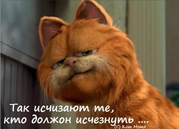 Блог Кота Моти  - Страница 3 EwXnXIzWUAMoKMT