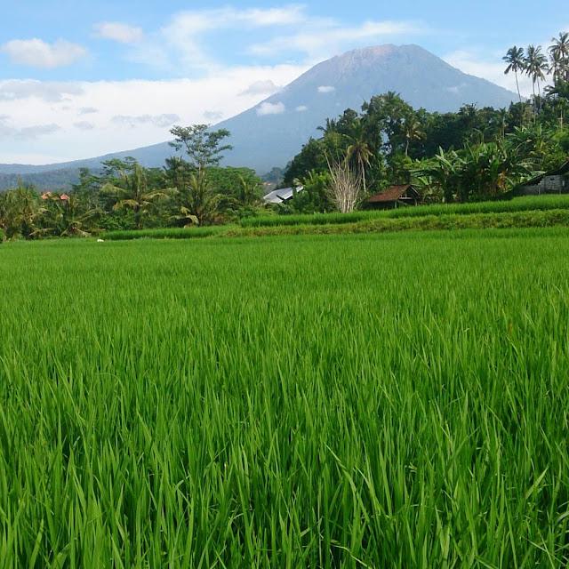 Berita Bali terkini, Info Bali hari ini