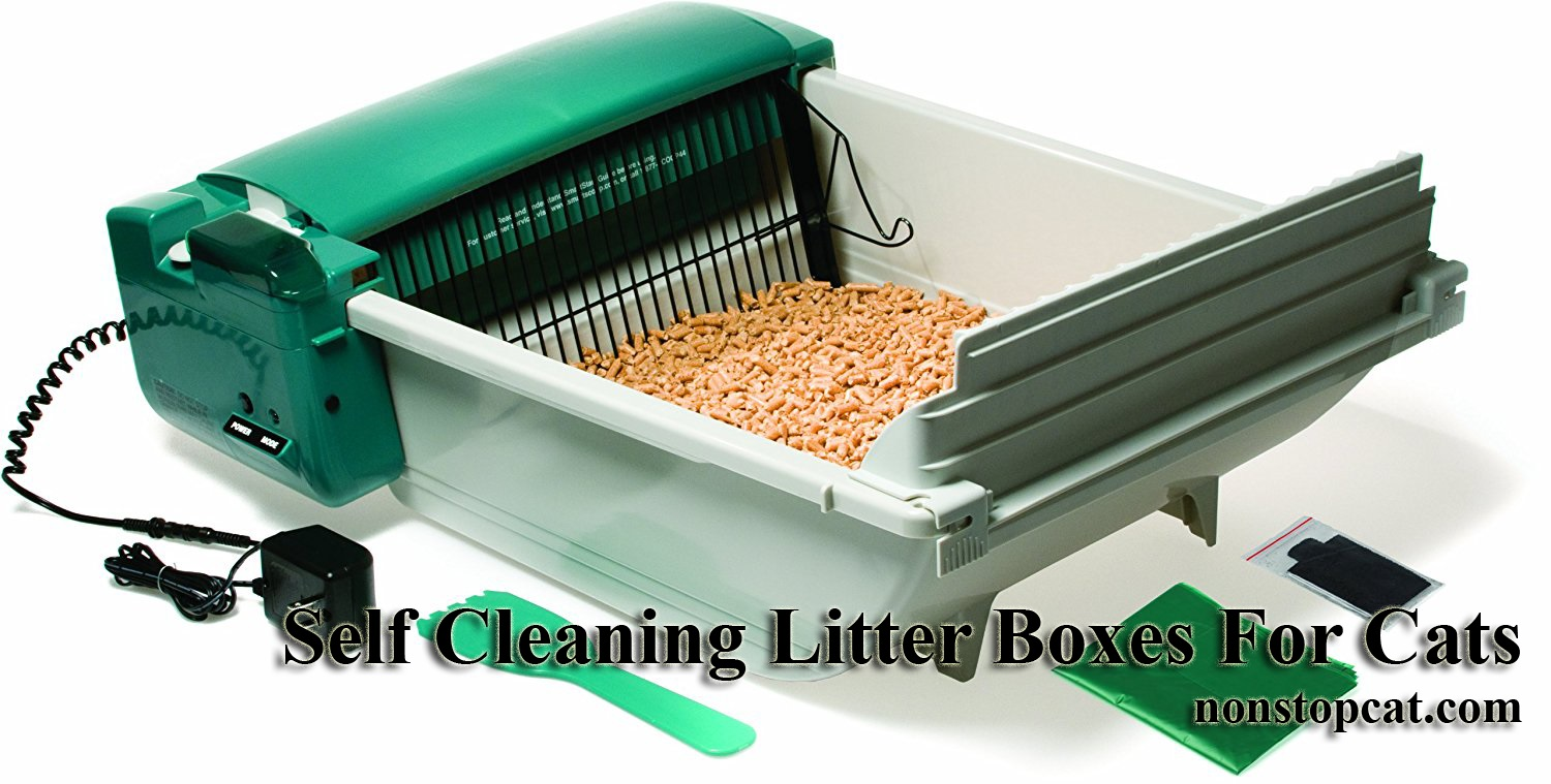 Self Cleaning Litter Boxes For Cats