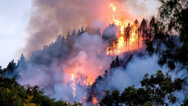 Se esperan que se superan la mil cuatrocientas hectáreas arrasadas del incendio de Gran Canaria
