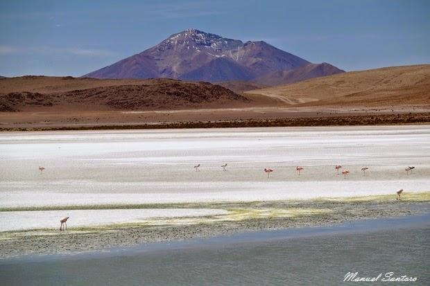 Reserva Nacional de Fauna Andina Eduardo Avaroa, Laguna Hedionda