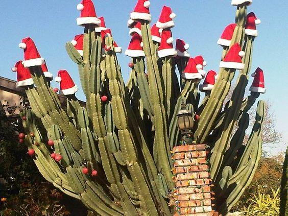cactus, Cactus Christmas Tree, Christmas Tree, ornaments, holiday tree, holiday, holiday decor, Santa Hat Cactus