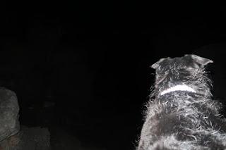 BeeGee staring down into Dogleg Canyon