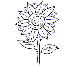 Gambar Bunga Matahari Hitam Putih