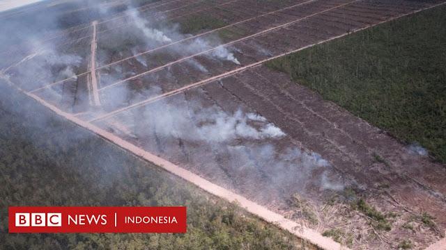 Hutan Papua Sengaja Dibakar Perusahaan Korsel untuk Lahan Sawit, Netizen: Terkutuklah Pemberi Izin!