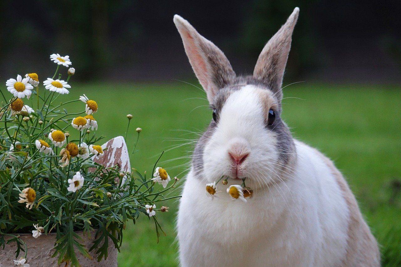 erek erek kelinci