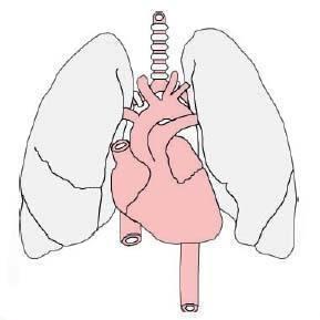 你能活多久,肺氣說了算!肺氣足,腎精滿,元氣升!(宗氣、養生)