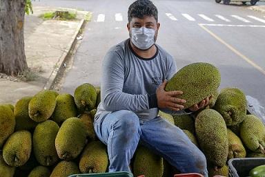 Alternativa para alimentação, jaca ganha espaço no agronegócio paranaense