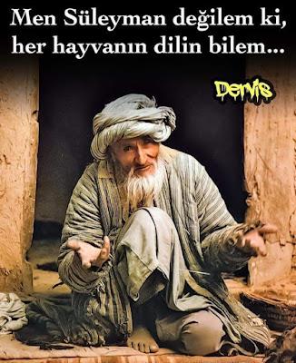 """""""Men Süleyman değilem ki, her hayvanın dilin bilem"""", hayvan, süleyman peygamber, hayvan dili, derviş, sitemli sözler, anlamlı sözler, özlü sözler, güzel sözler"""