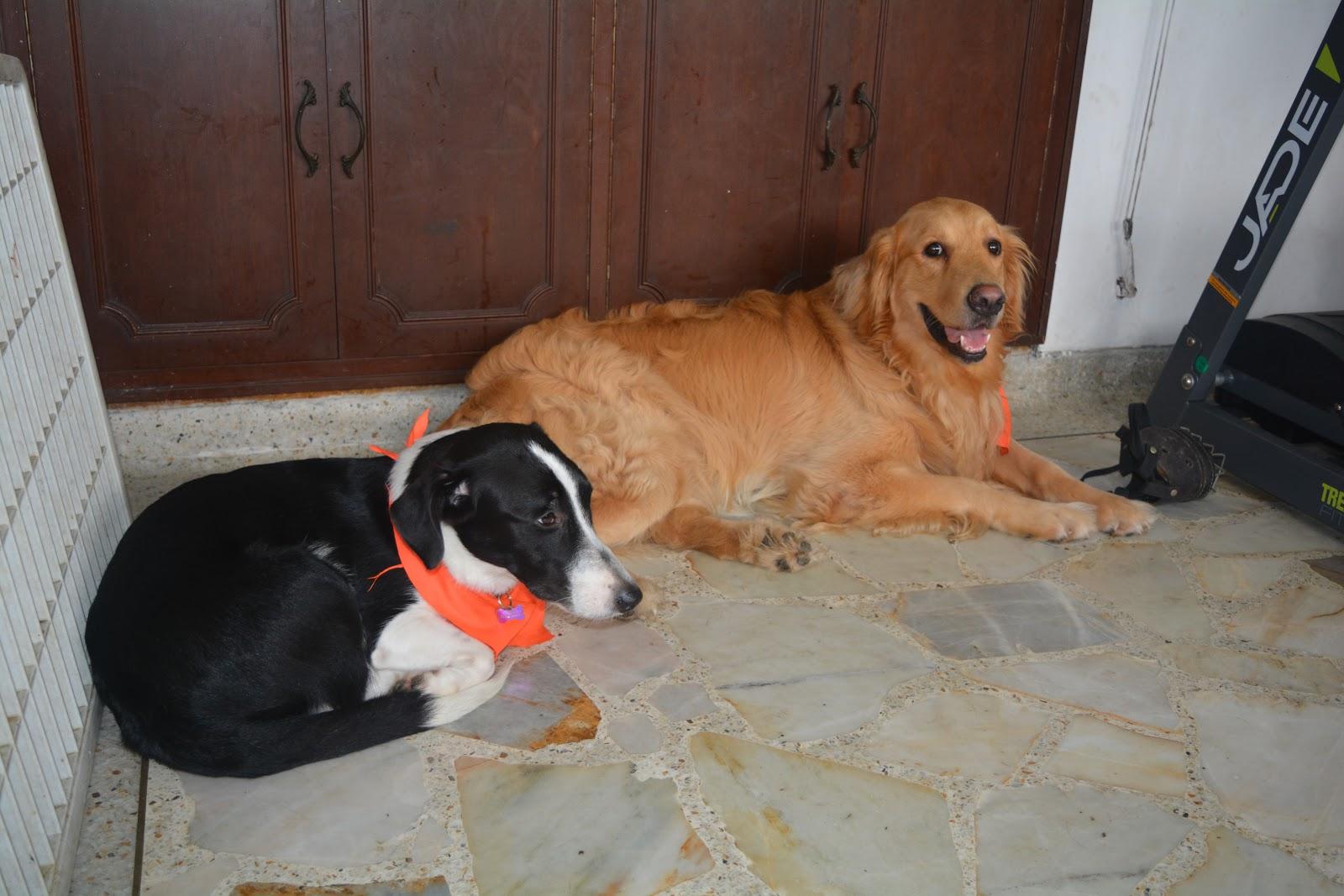 Revista interactiva q viral un gimnasio para perros la for Gimnasio zeus