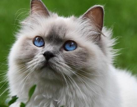 8 Arti Mimpi Digigit Kucing Menurut Primbon Jawa Terlengkap