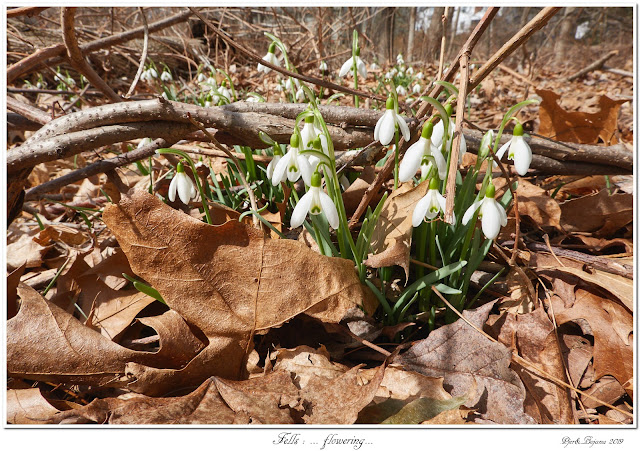 Fells: ... flowering...