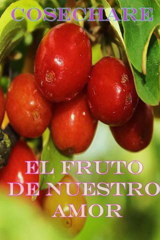 Cosechare el fruto de nuestro amor