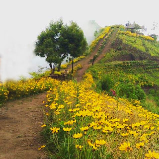 lokasi bukit kembang, perjalanan bukit kembang