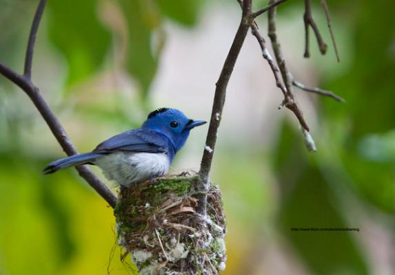 Gambar Burung Berwarna
